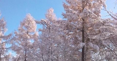 11月21日(木)、飯綱東区です。 前日の夜からさらさら降り始めていた雪が積もりました。 最初は曇っていて寒そうでしたが太陽が出てくるととてもきれいでした。 その日のうちに雪は消えてしまいましたが、どんどん冬本番に近づい...