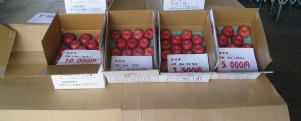 11月23日(土)午前9時から、芋井りんご共選所で 芋井産リンゴの「ふじ祭り」が開催されました。  午前中でほぼ完売状態だったらしく、午後見に行った方にお話しを伺ったところ「ほとんど売れてしまっていたなぁ・・・。」 とい...