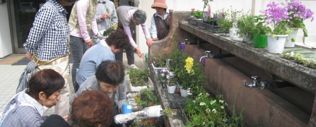 5月17日(土)、改善センター入り口にて『お花づくり'好'流会』を開催しました。 花の苗をお持ちいただかなくても 気軽に寄っていただき 地域の皆さんが交流していただくことを 目的として開催したものです。 当日はお天気にも...