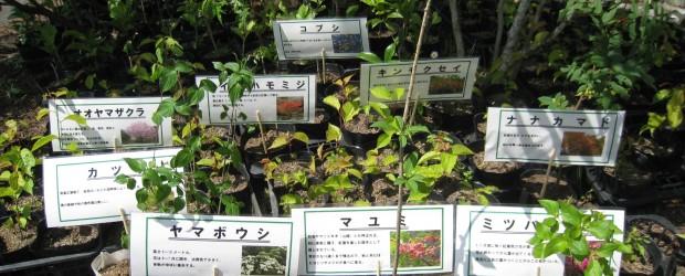 平成28年度の春、長野県で開催される「全国植樹祭」に向けて苗木の無料配布を行っています。 配布された苗木は植樹会場で植えることもできますし、そのままご家庭で育てていただく事も出来ます。 希望者は住民自治協議会までお越しい...