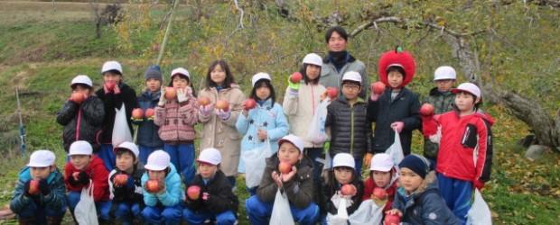 11月29日(火)、芋井小学校の児童が9月にシールを貼った自分のりんごを収穫しました。 芋井の地域おこし協力隊の古川隊員が育てているりんごに、芋井小学校の子ども達が書いた文字や絵のシールを貼り 赤くなるのを待って、本日い...