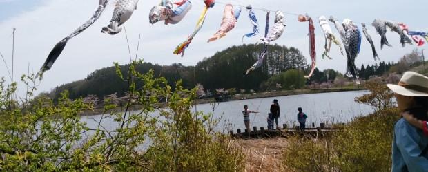 ゴールデンウイークの最終日の5月7日(日)、広瀬ふれあい公園で「芋井の里ふれあい祭」が初めて開催されました。 地区の方からお預かりしたこいのぼり108匹を池に上に泳がせ、周りにあるしだれ桜も満開で絶好のお祭り日和でした。...