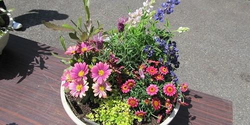 4/21(土)、芋井公民館でガーデニング講座を開催しました。 7種類(ルピナス・フレンチラベンダー・ドドナエ・ネメシア・オステオスペルマ ム・マーガレット・バコバ)の花の寄せ植えをしました。 丁寧に教えてくださいます。 ...