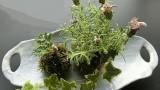 5月29日(火)、芋井公民館で「苔玉づくり講座」が開催されました。 2種類の花と芋井に生える苔を使って苔玉づくりを体験しました。 これからの季節、お部屋に苔玉が一つあると涼しさが演出されます。