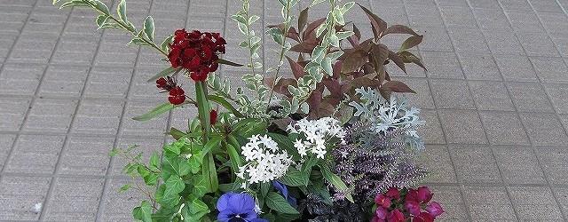 10月20日(土)芋井公民館でガーデニング講座を開催しました。 10種類(ペンタス・シジラムラサキ・ダイアンサス・こしょう・パンジー・キンギョソウ・アイビー・カルーナ・シロタエ・プリペイド)の花の寄せ植えをしました。 参...