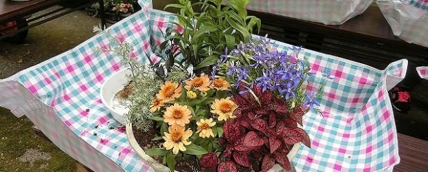 6月6日(土)ガーデニング講座を開催しました。 ペンステモン・オニキスレッド・イソトマ・ウェストリンギア・ヒポエステス・ジニアの 6種類の花の寄せ植えをしました。