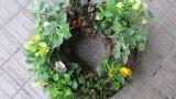 10月17日(土)  秋のガーデニング講座を開催しました。 鉢への寄せ植え(ケイトウ(セロシア)・ラベンダー(メルロ)・宿根コスモス・ハクチョウゲ・ビオラ×2)と リースの寄せ植え(ヘデラ×2・ビオラ×4・チ...