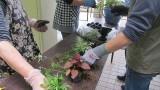 令和3年5月17日(月) 芋井公民館にて「苔玉づくり講座」を開催しました